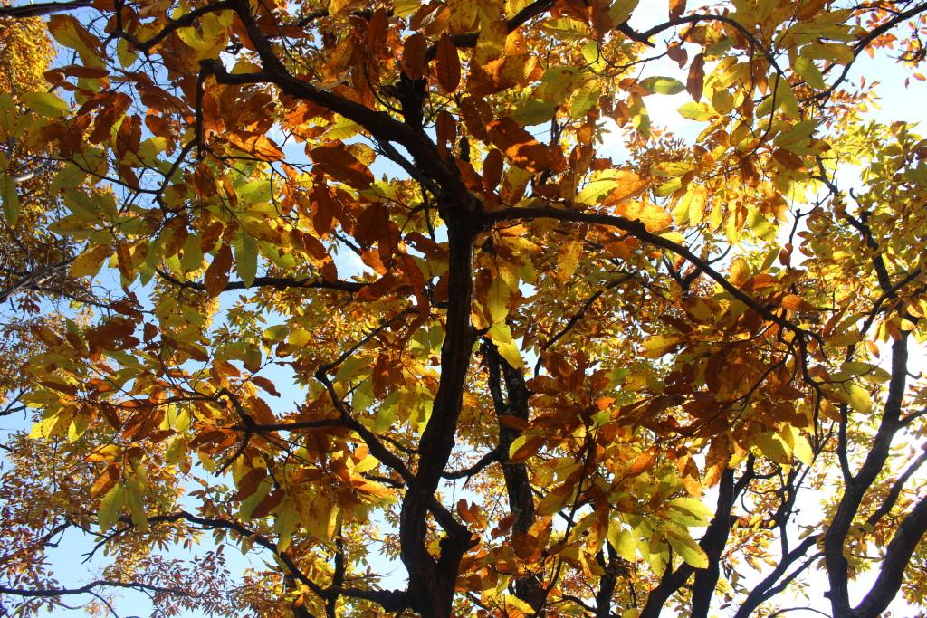 visit-kyoto-november-fall-foliage-iwatayama-monkey-park